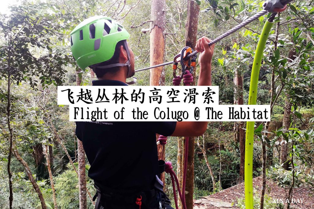Zipline Flight of the Colugo @ Penang Hill