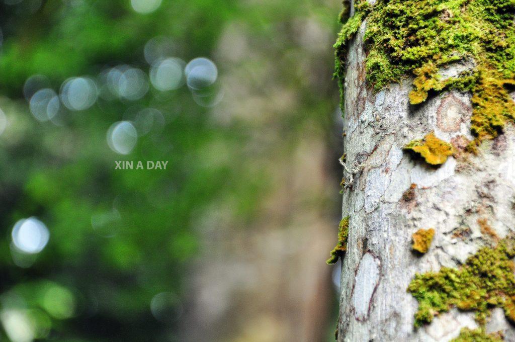 Sungai Congkak X SOWM 马来西亚荒野保护协会